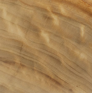 wood_sample_poplar.jpg